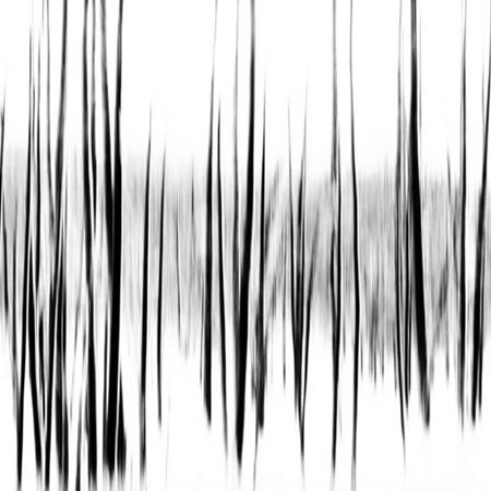 Showroom - Art - Brian Goodman - Forrest Frequencies
